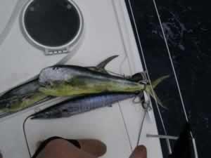 fischen05